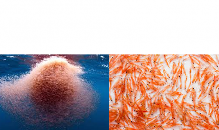 KRILL-OMICS AND WHAT IT IS USEFUL FOR