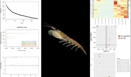 SMALL-RNA-SEQ FOR NON-MODEL ORGANISMS: THE ANTARCTIC KRILL EXAMPLE