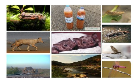 FROM DETECTING SINGLE PREY SPECIES TO METABARCODING A 900KM RIVER: A SHOWCASE OF ENVIRONMENTAL DNA RESEARCH BY ENVMETAGEN, PORTUGAL