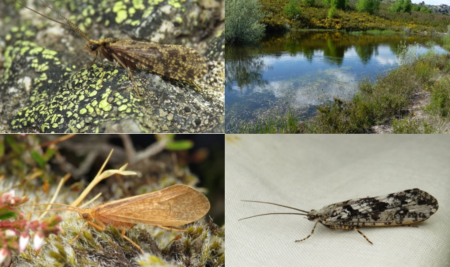 DNA BARCODING OF IBERIAN TRICHOPTERA: DOCUMENTING BIODIVERSITY FOR FRESHWATER BIOMONITORING IN A MEDITERRANEAN HOTSPOT