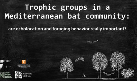 TROPHIC GROUPS IN A MEDITERRANEAN BAT COMMUNITY: ARE ECHOLOCATION AND FORAGING BEHAVIOR REALLY IMPORTANT?