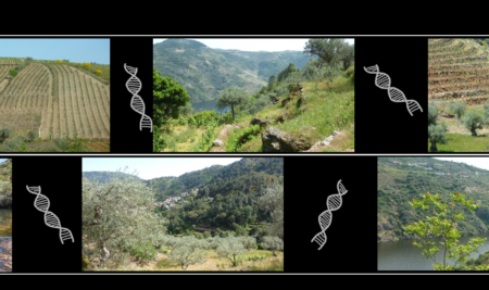 DNA METABARCODING AND THE BIODIVERSITY IN THE MEDITERRANEAN BASIN